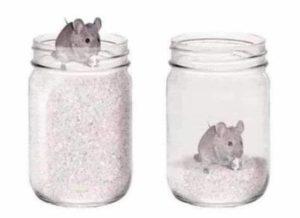 Reflexion-El-raton-y-un-frasco-lleno-de-trigo-NevilleCharbonnier.com